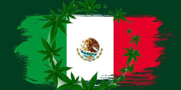 Primer paso para la legalización de la marihuana en México