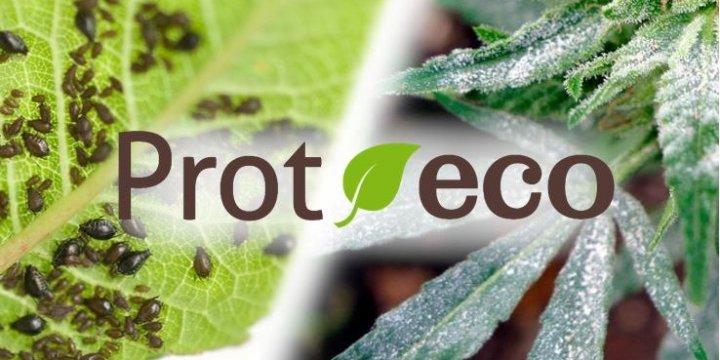Tratamiento de plagas y enfermedades con Prot-eco