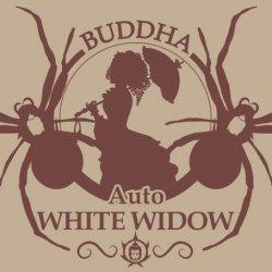 BUDDHA AUTO WHITE WIDOW